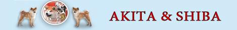 Первый питомник Акита,№ 1 в России,щенки акита-ину и шиба